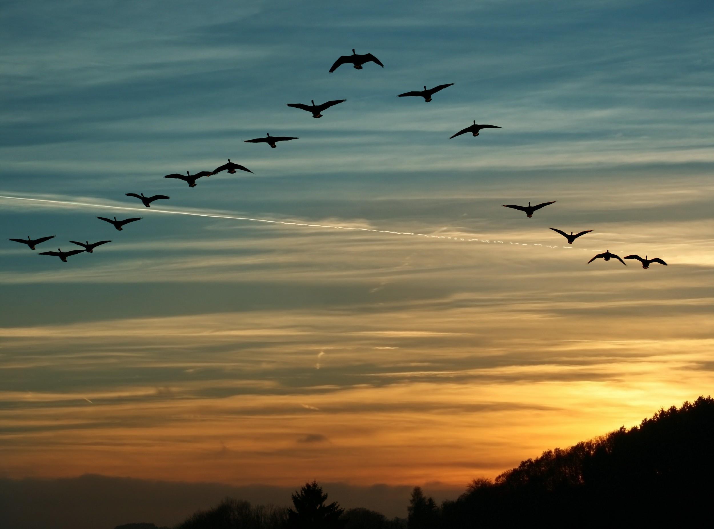 бывало, картинки летящих птиц мне