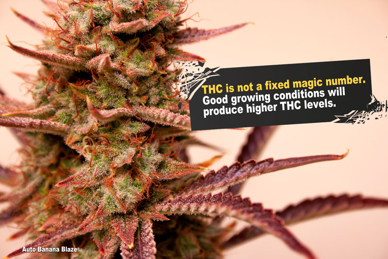 Тгк 30 конопля аккорды песни фактор марихуана