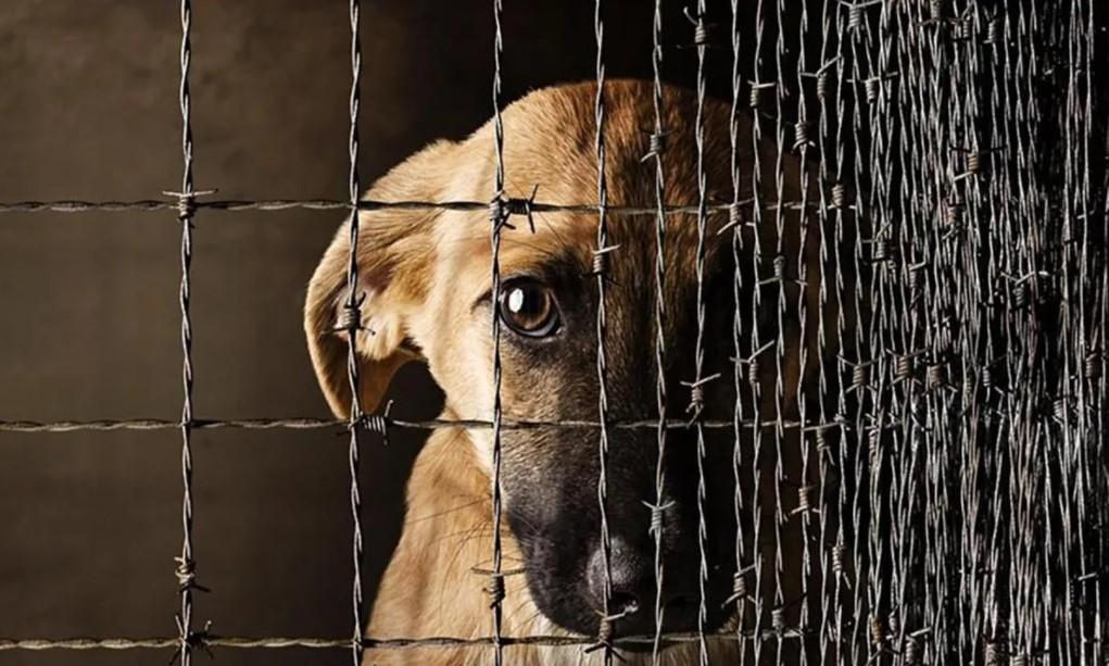 В Думу внесли законопроект о штрафах для недобросовестных владельцев животных