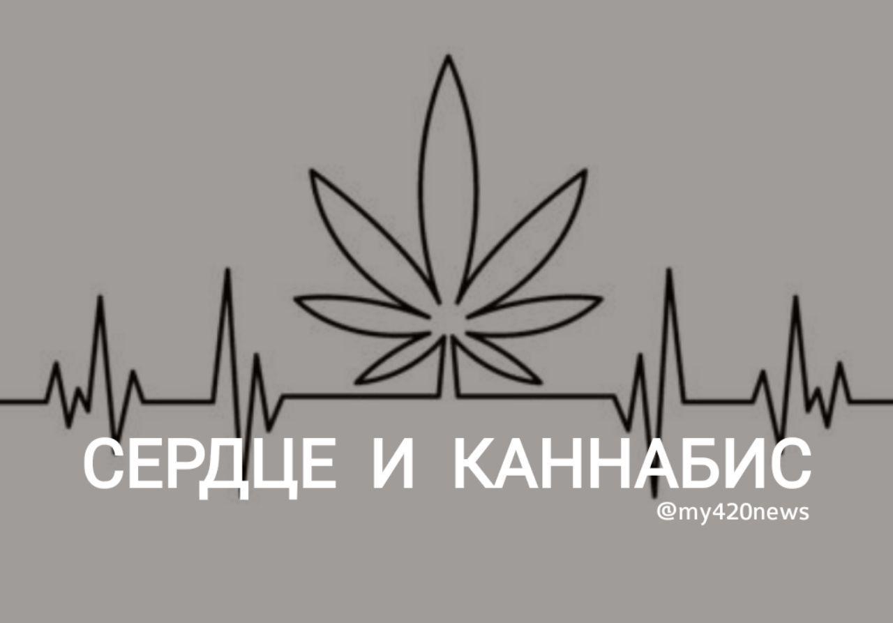 Марихуана вредит сердцу сколько человек погибло от марихуаны
