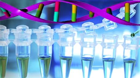 政府部门的DNA分析