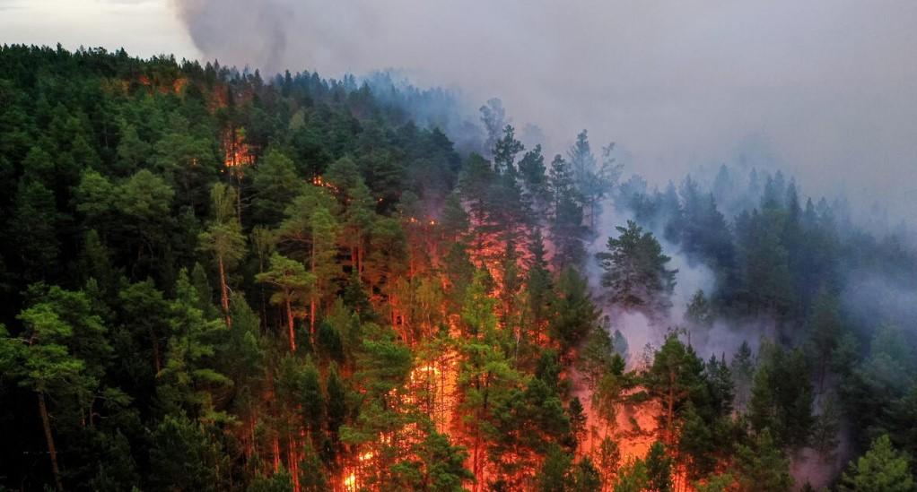 В России зафиксировано более 550 природных пожаров
