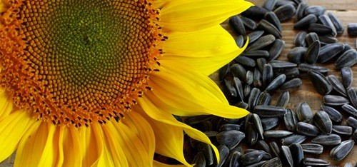 COVID-19 Update: Sunflower De-Oiled Lecithin Market Research Report and  Future Scope (2019-2026) | Key Players- DuPont, Cargill, Incorporated,  Archer Daniels Midland Company — Teletype